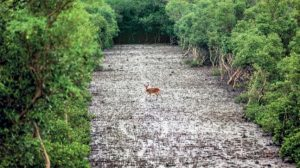 Massacre of the Mangroves – The Big Story News