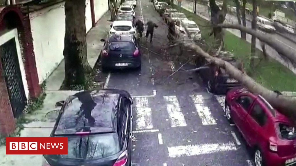 CCTV shows narrow escape from tree in Turkey